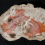 Small St Johns Petrified Wood